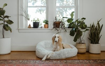 How to Choose a Pet Friendly Rug?!